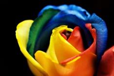 rainbow_rose_28336655002929