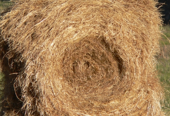 round_hay_bale2c_partially_eaten